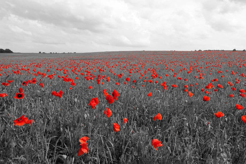 Blumenfeld schwarz Rot