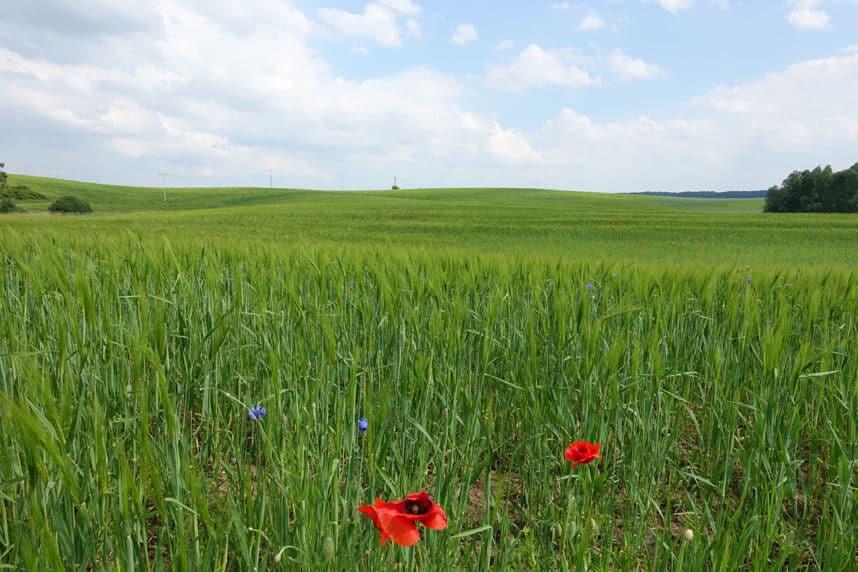 Blick über Wiesen und Felder